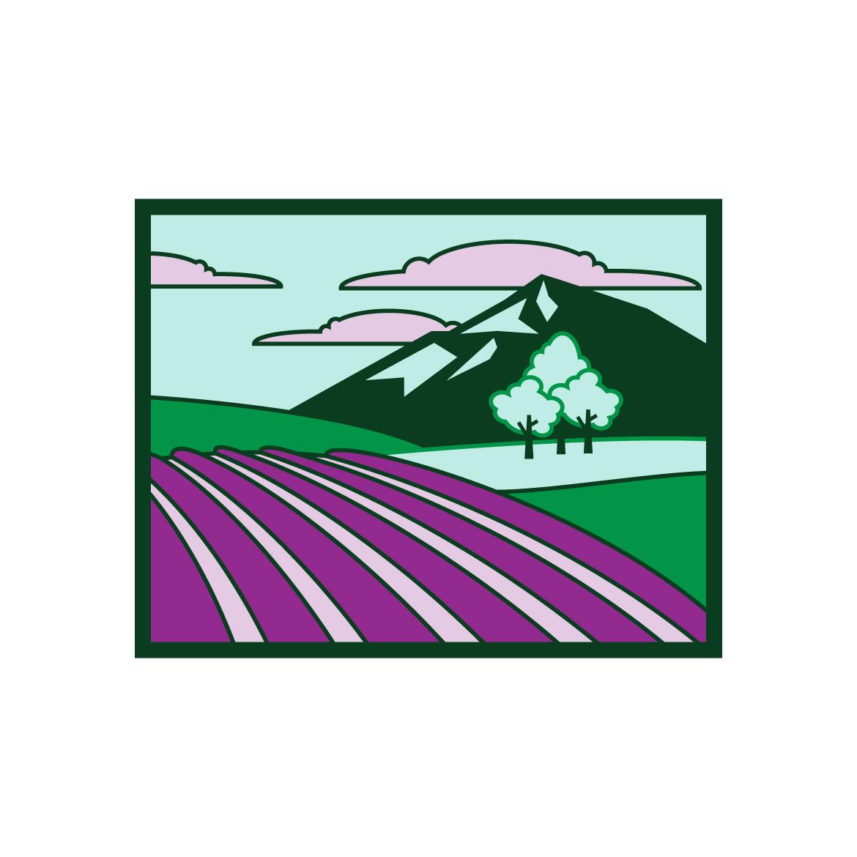 illustration lavender field